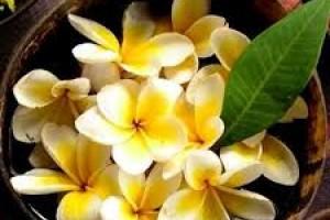 Самые известные цветочные композиции с нотой тиаре